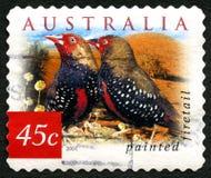 被绘的Firetail澳大利亚邮票 免版税库存图片