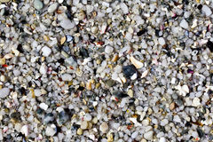 被击碎的海滩石头和壳 免版税库存图片