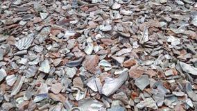 被击碎的牡蛎,蚝壳背景 免版税库存照片