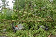 被击碎的硕大下落的白扬树在其中一个停放了汽车由于严厉飓风莫斯科市庭院中  库存照片