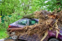 被击碎的被摧毁的树的硕大根在其中一个停放了汽车由于严厉飓风莫斯科庭院中  图库摄影