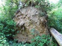 被翻转的树 免版税图库摄影