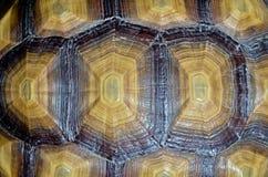 被仿造的甲壳。 免版税库存图片