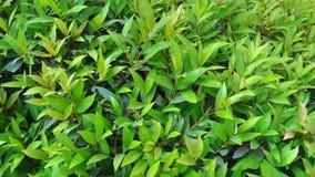 被仿造的绿色叶子 免版税库存照片