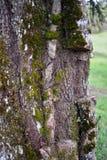 被去除的寄生生物树 免版税库存图片