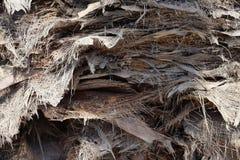 被去除的棕榈裙子和叶子 库存图片