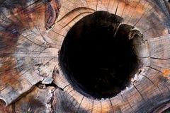 裁减木树桩细节与孔的 图库摄影