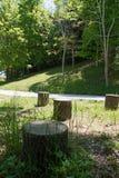裁减树的树桩在公园 免版税库存照片