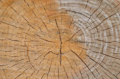 裁减桤木1 免版税库存图片