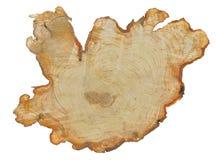 裁减桤木18 免版税图库摄影