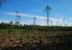 裁减森林 免版税库存照片