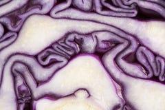 裁减红叶卷心菜背景,抽象 免版税图库摄影