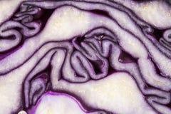 裁减红叶卷心菜背景,抽象 免版税库存图片