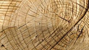 裁减踪影在树干的 免版税库存图片