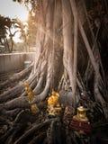 裂口寺庙修士树光 库存图片