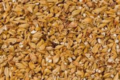 破裂的含麦芽的大麦 免版税库存照片
