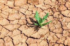 破裂的地球用草新芽 库存图片