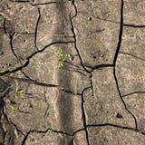 破裂的打破地球和小的新芽 免版税库存图片