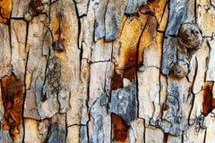 崩裂的木头 免版税库存照片