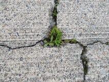 破裂的混凝土,贬低与通过生长的杂草 库存图片