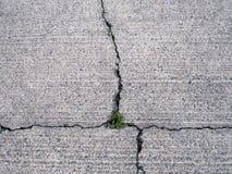 破裂的混凝土,贬低与通过生长的杂草 免版税图库摄影