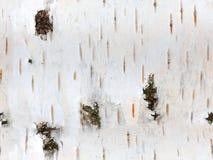 破裂的白桦树皮无缝的纹理 库存照片