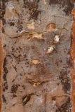破裂的葡萄酒墙壁背景 库存图片