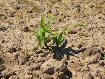 破裂的黏土干燥地面与前朵绿色花的 阴影锋利的形状  免版税库存图片