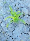破裂的黏土干燥地面与前朵绿色花的 阴影锋利的形状  免版税库存照片
