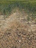 破裂的黏土干燥地面与前朵绿色花的 阴影锋利的形状  免版税图库摄影