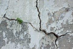 裂缝的植物 免版税库存图片