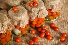 装于罐中的盐土植物家庭菜冬天 银行烂醉如泥的蕃茄 图库摄影