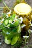 装于罐中的黄瓜在家 免版税图库摄影
