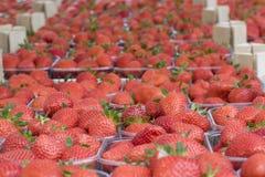 装入草莓 免版税库存图片