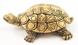装甲装饰金印度母亲珍珠乌龟 库存照片