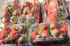 装箱的草莓 库存图片
