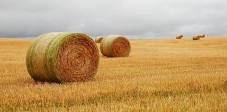 装箱麦子 库存图片