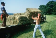 装载干草捆的人在卡车 免版税库存图片