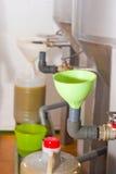 装载的油橄榄 免版税库存图片