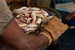 装载者采取鱼篮子  卸载在南印度的港的一艘捕鱼船 免版税库存照片