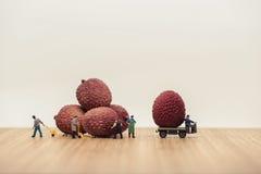 装载荔枝的微型搬家工人在卡车 免版税库存图片