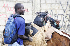 装载被购买的猪 免版税图库摄影