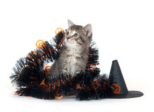装饰万圣节小猫平纹 库存照片