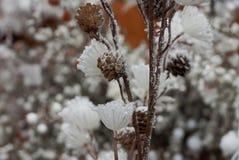 装饰与干燥分支和锥体的新年在人为雪下 库存图片
