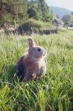 装饰兔子 免版税图库摄影