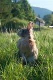装饰兔子 库存照片