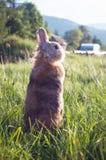 装饰兔子 免版税库存照片