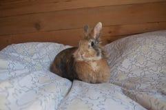 装饰兔子 免版税库存图片