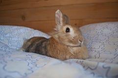 装饰兔子 库存图片