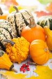 装饰南瓜和秋叶为万圣夜 免版税库存图片